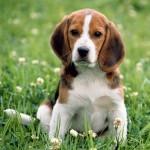 mantenimiento-perro