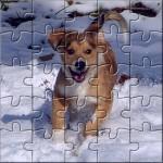 cachorros-en-adopcion