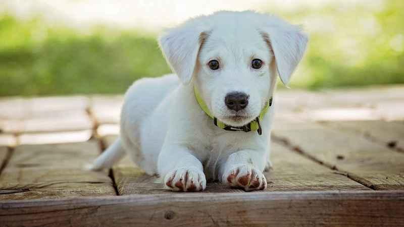 coste mantenimiento cachorro