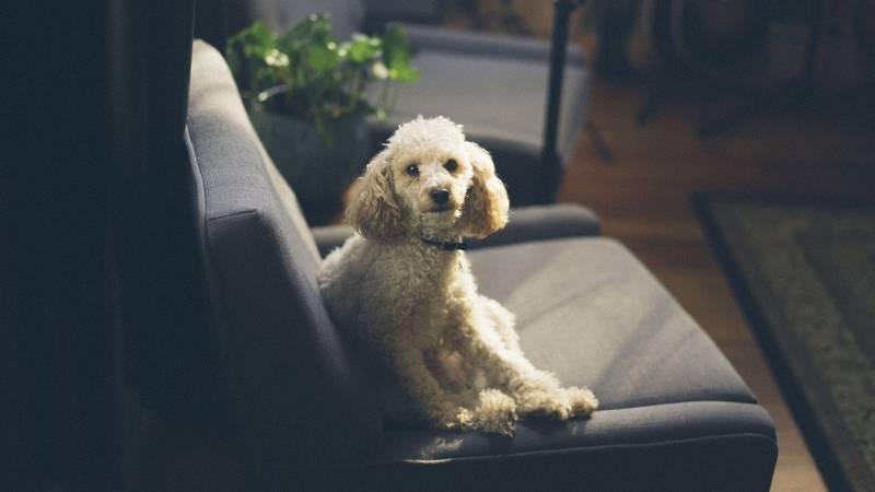 cuanto cuesta mantener un perro